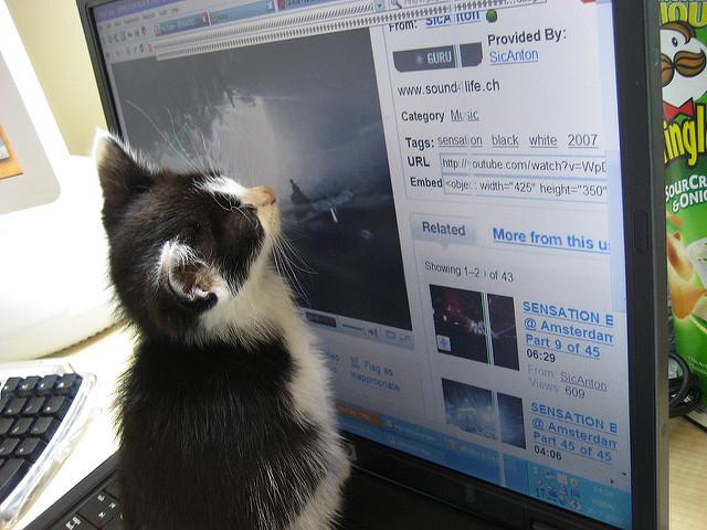 Kitten watching video